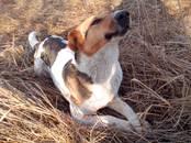 Поиски, находки Собаки, Фото