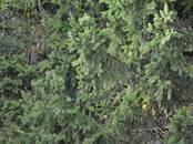 Земля и участки,  Московская область Мытищи, цена 4 275 000 рублей, Фото