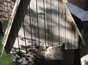 Дома, хозяйства,  Ленинградская область Выборгский район, цена 2 280 000 рублей, Фото