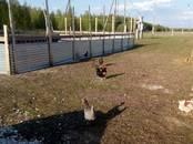 Земля и участки,  Рязанская область Другое, цена 25 000 000 рублей, Фото