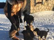 Собаки, щенки Восточно-Сибирская лайка, цена 5 000 рублей, Фото