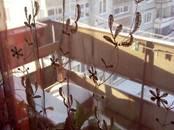 Квартиры,  Новосибирская область Новосибирск, цена 3 160 000 рублей, Фото