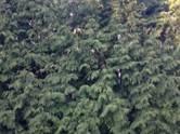 Дома, хозяйства,  Московская область Химки, цена 45 000 000 рублей, Фото