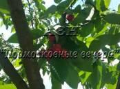 Дома, хозяйства,  Московская область Королев, цена 8 900 000 рублей, Фото