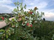 Дачи и огороды,  Новосибирская область Новосибирск, цена 400 000 рублей, Фото