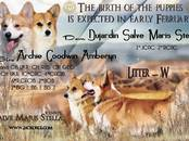 Собаки, щенки Вельш корги пемброк, цена 60 000 рублей, Фото