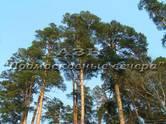 Земля и участки,  Московская область Видное, цена 28 000 000 рублей, Фото