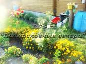 Дачи и огороды,  Московская область Горьковское ш., цена 850 000 рублей, Фото