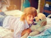 Собаки, щенки Золотистый ретривер, цена 500 y.e., Фото