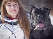Собаки, щенки Кане Корсо, цена 50 000 рублей, Фото
