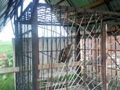 Дома, хозяйства,  Краснодарский край Ленинградская, цена 11 000 000 рублей, Фото