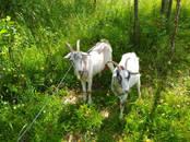 Продовольствие Молочная продукция, цена 100 рублей/литр, Фото