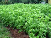 Сельское хозяйство Удобрения и химикаты, цена 1 050 рублей, Фото